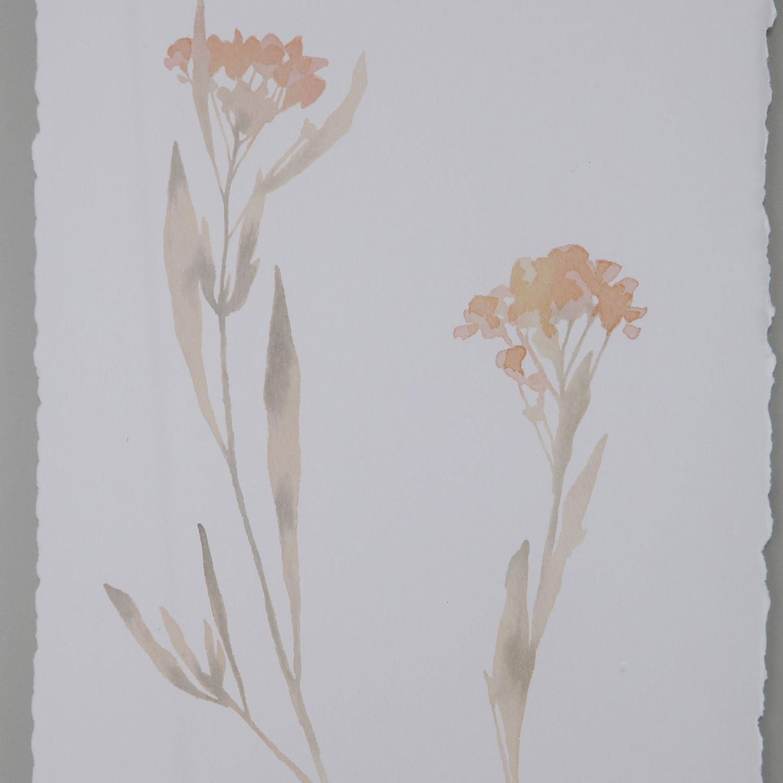 Uttermost Flourish Framed Botanical Prints - Set of 4
