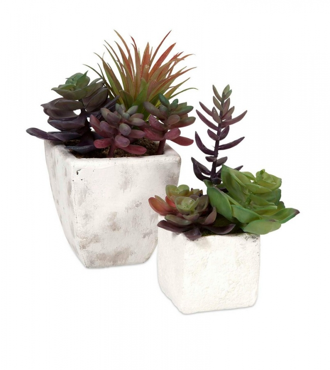 Wolek Potted Succulents - Set of 2