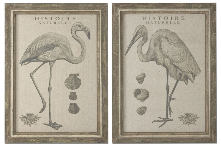 Natural History Framed Art - Set of 2