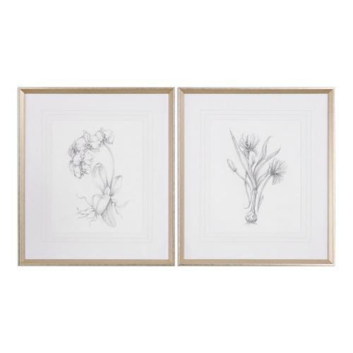 Botanical Sketches Framed Prints - Set of 2