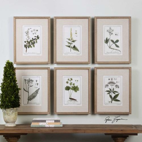 Green Floral Botanical Study Prints - Set of 6