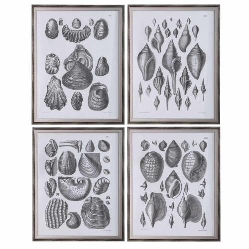 Marine Study Framed Prints - Set of 4