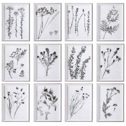 Contemporary Botanicals Framed Prints, S/12