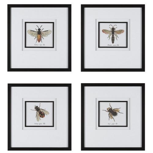 Anthophila Framed Prints - Set of 4