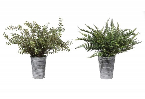 Quimby Potted Ferns - Set of 2