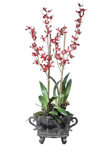 Reza Potted Orchid