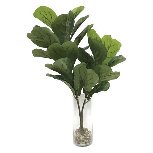 Urbana Fiddle Leaf Fig Plant