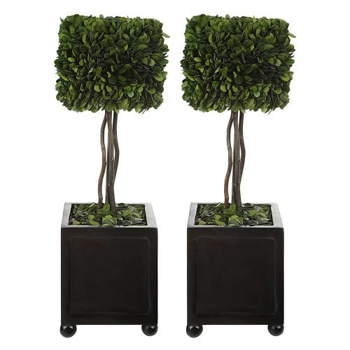 Preserved Boxwood Square Topiaries - Set of 2